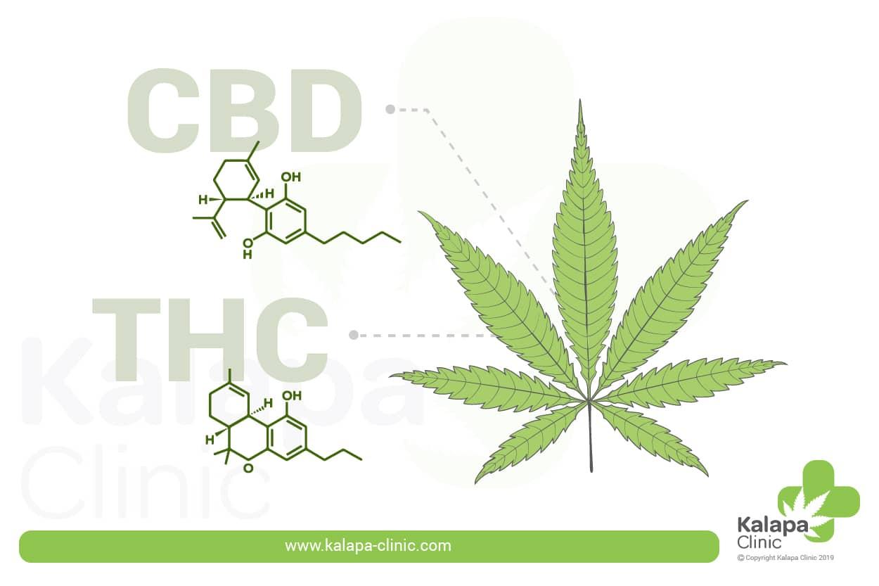 Quelle est la différence entre le CBD et le THC?